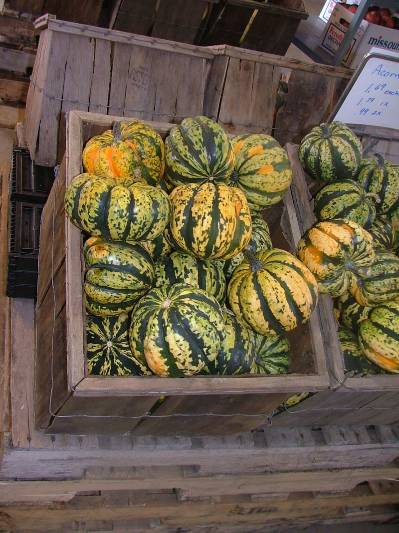 Pumpkin Picking 2008 025